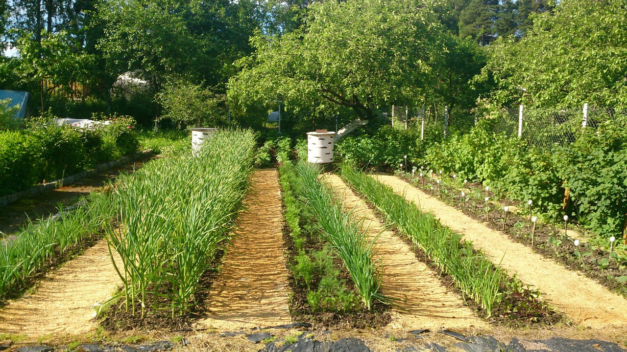 Применение опилок на огороде