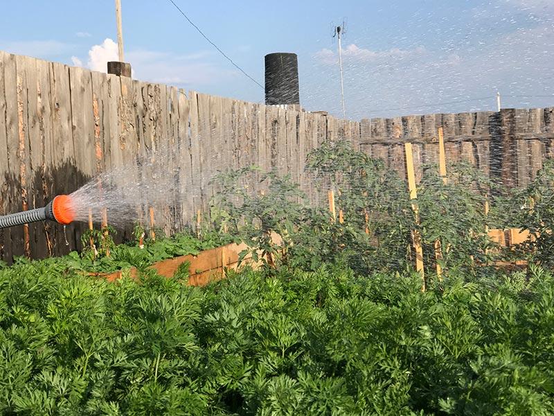 Как поливать огород в жару