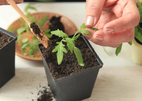 повреждение корней при пересадке