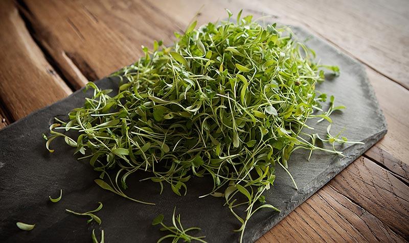 Микрозелень - польза и вред