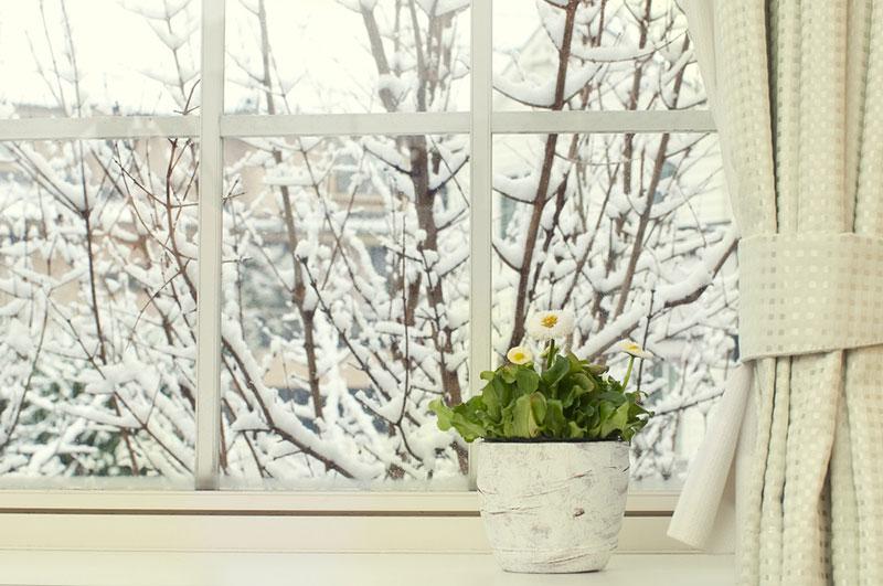 Как грамотно ухаживать за домашними растениями зимой