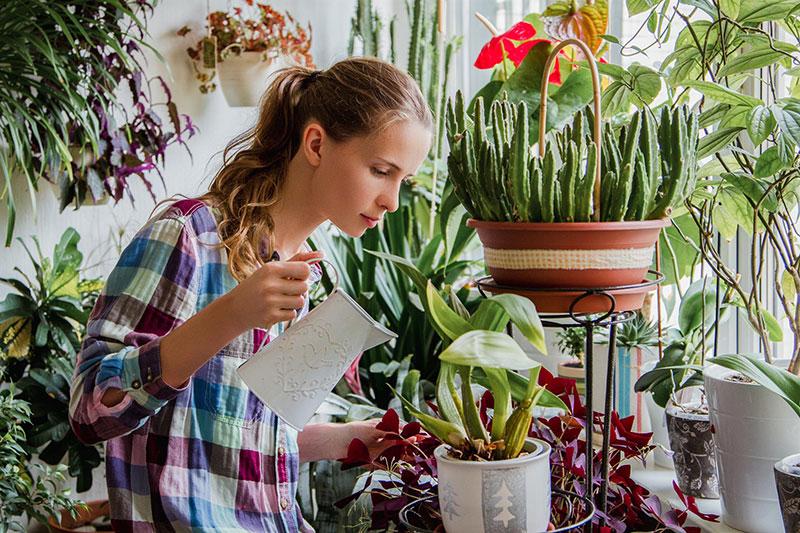 уход за комнатными цветами в зимнее время