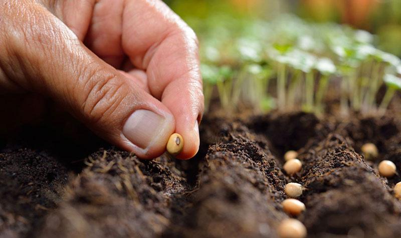 Мифы при выборе семян