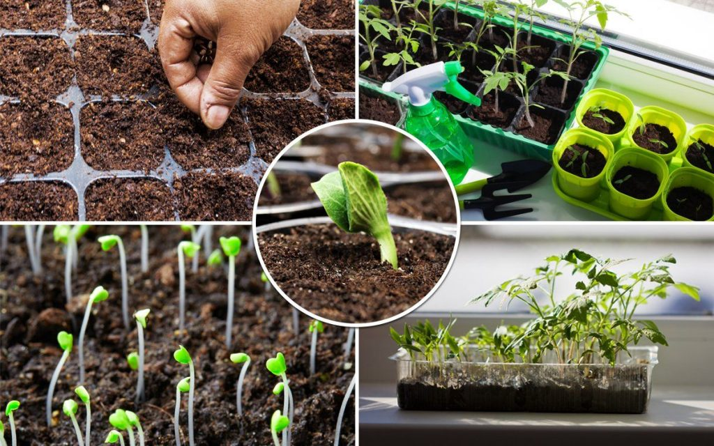 Факторы получения хорошего урожая на огороде