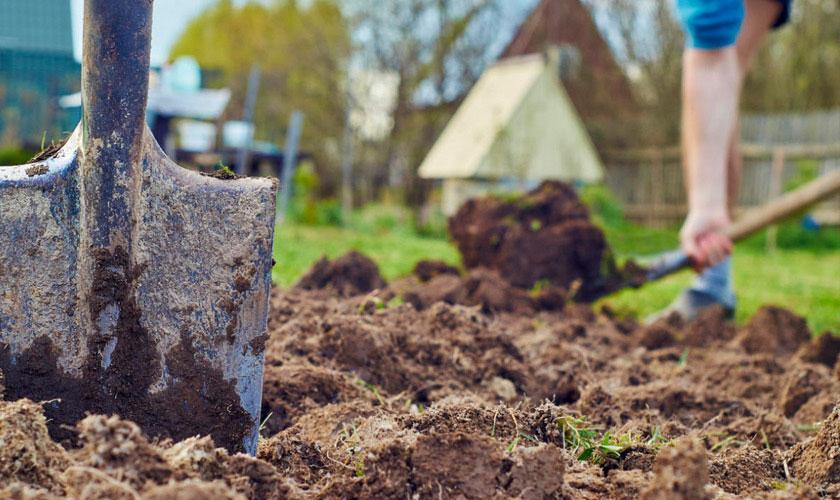 Получение урожая без вспахивания земли