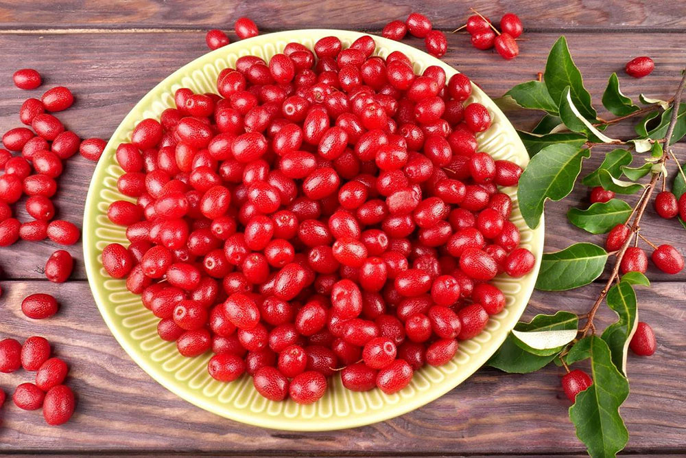 У северных форм лоха плоды больше лекарственные, чем пищевые
