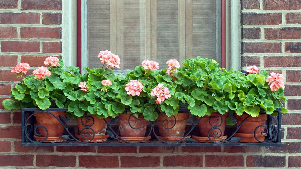 Какие цветы будут хорошо смотреться за окном квартиры