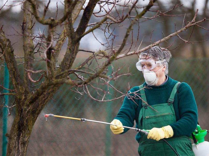 Чем опрыскать осенью деревья от вредителей